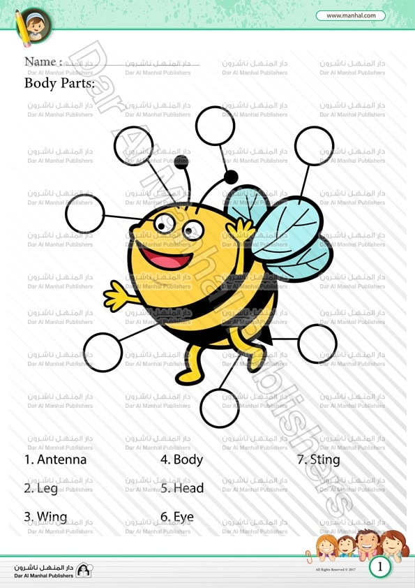 Body Parts - Bee 2   Science WorkSheets