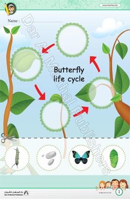 دورة حياة الفراشة العلوم اوراق عمل