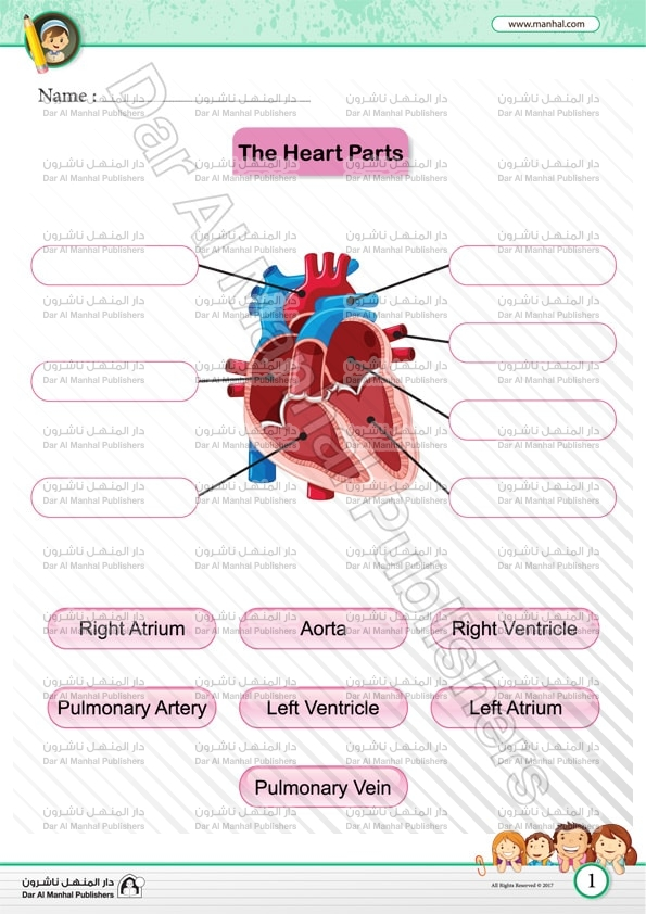 The Heart Parts Science Worksheets