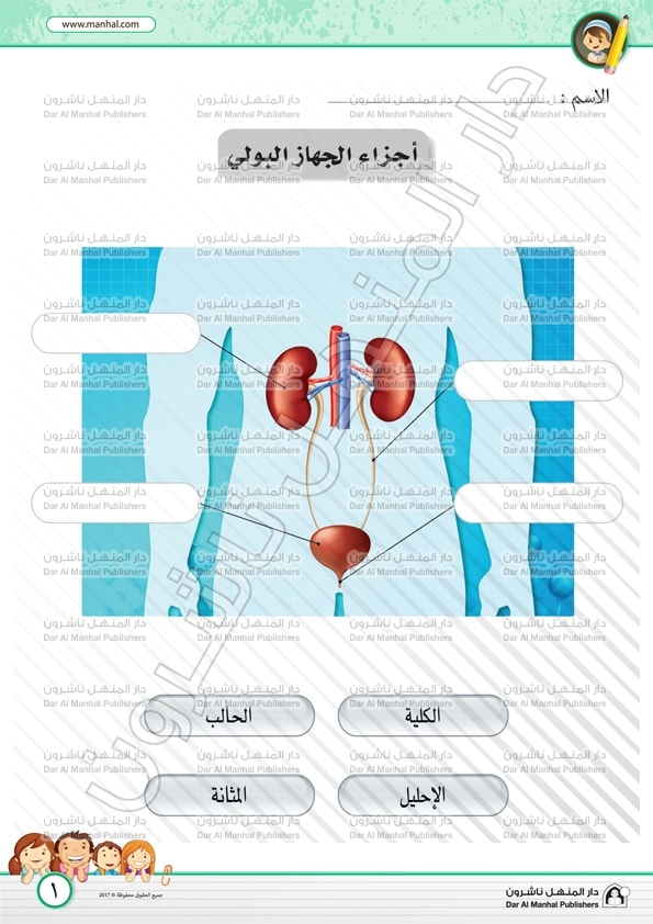 The Urinary System Parts